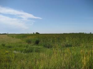 AO4-Mit Wetland (5)