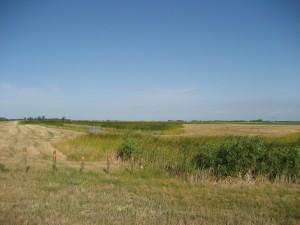 AO4-Mit Wetland (1)